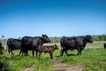 M21064- Ag Farm Animals -7655