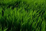 12019-Agriculture-farm-8663