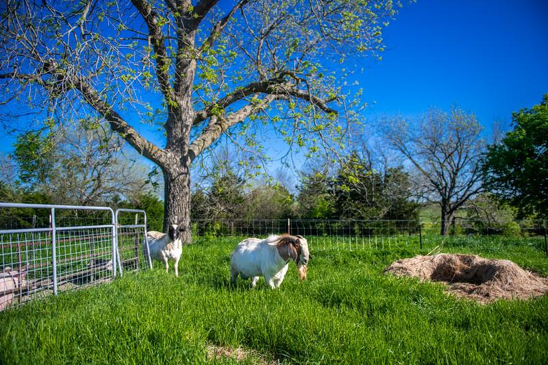 M21064- Ag Farm Animals -7592