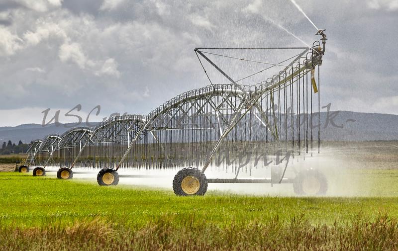 Farm Irrigation Sprinkler in Field