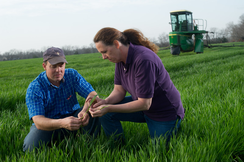 12019-Agriculture-farm-8609