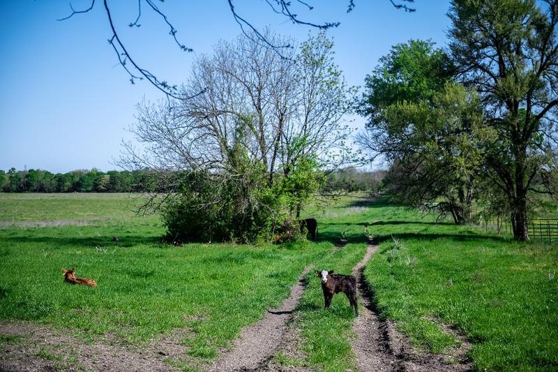 M21064- Ag Farm Animals -7642
