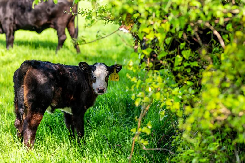 M21064- Ag Farm Animals -7724