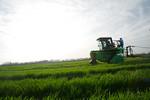 12019-Agriculture-farm-8731