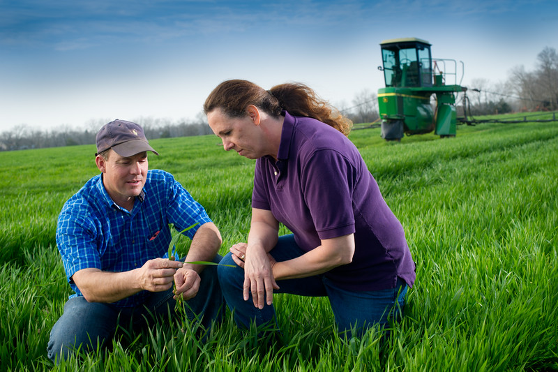 12019-Agriculture-farm-8607