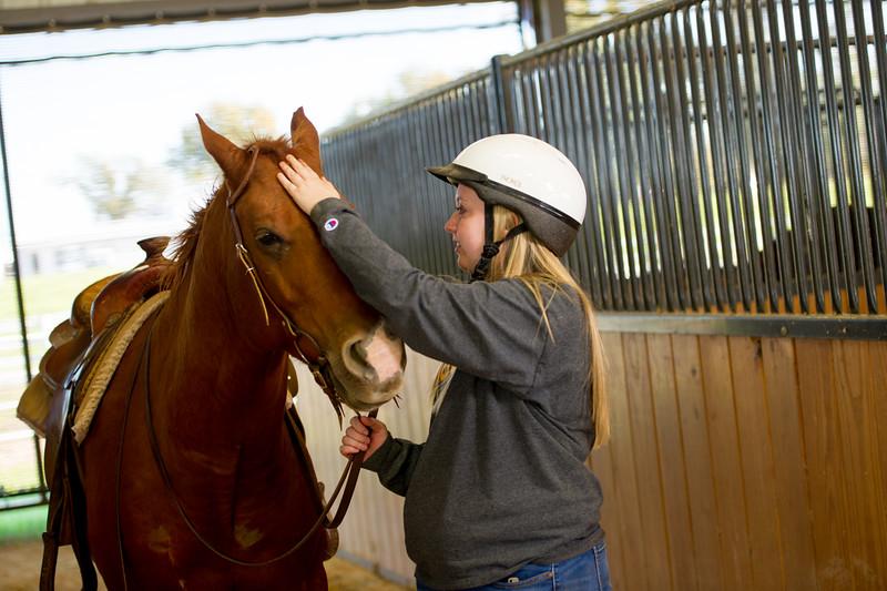 16190-equine -322