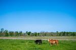 M21064- Ag Farm Animals -7677