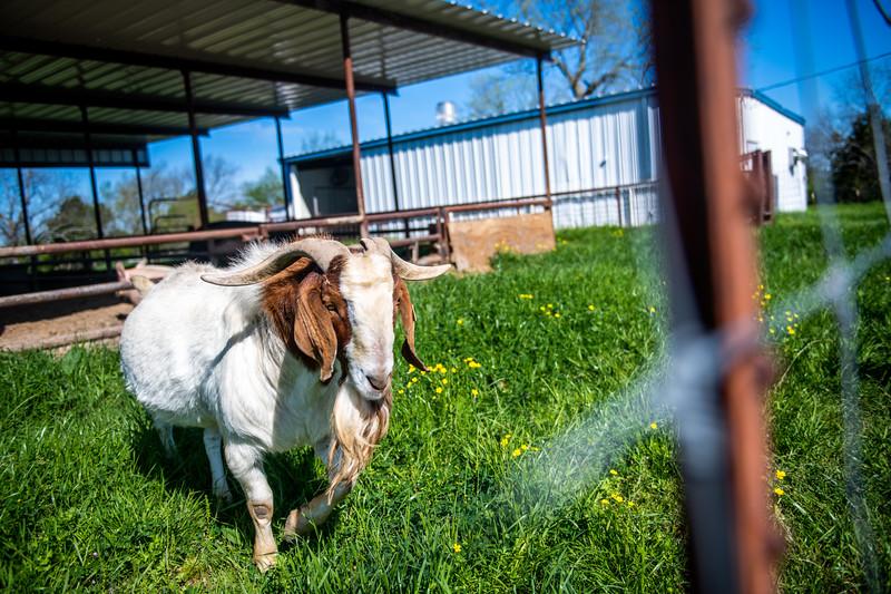 M21064- Ag Farm Animals -7914