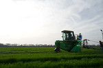 12019-Agriculture-farm-8706