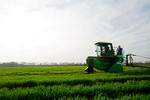 12019-Agriculture-farm-8704