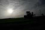 12019-Agriculture-farm-8729