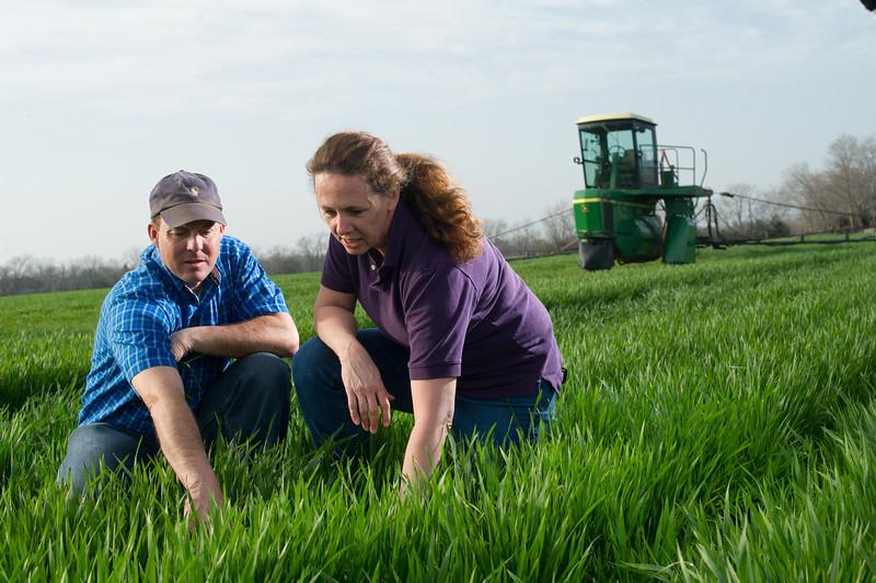 12019-Agriculture-farm-8648