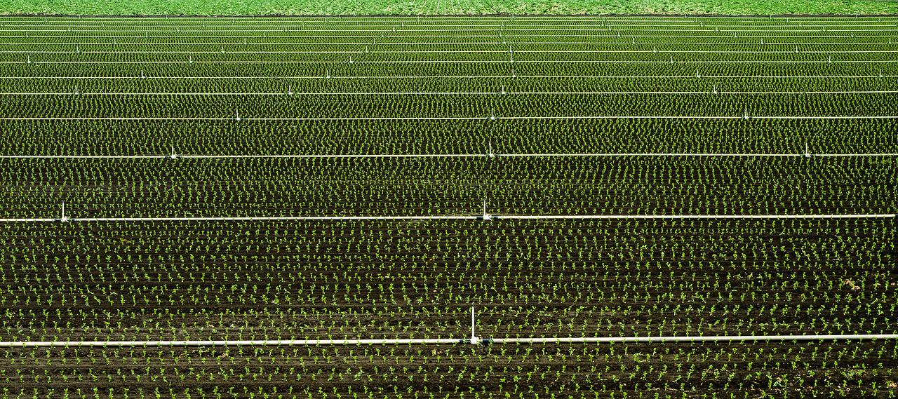 Field, Watsonville, California, 1994