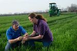12019-Agriculture-farm-8613