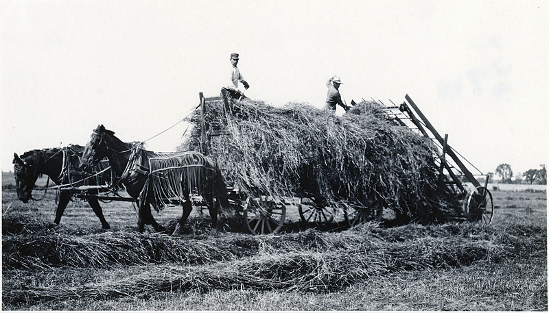 Loading hay. (Photo ID: 29663)