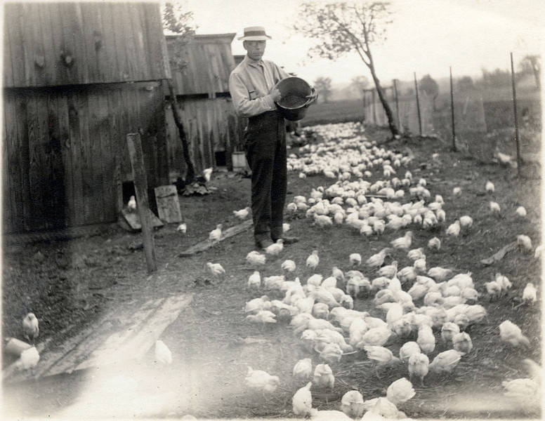 Feeding chickens. (Photo ID: 28135)
