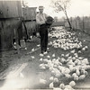 Feeding chickens. (Photo ID: 28135)