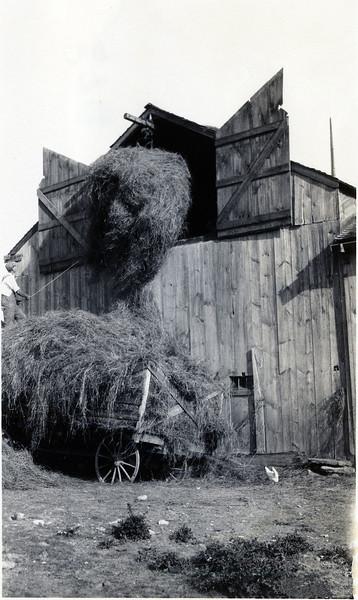 Putting hay in the barn. (Photo ID: 29671)