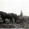 Martin Sheils raking hay. The horses names are Mickie and May. (Photo ID: 35801)