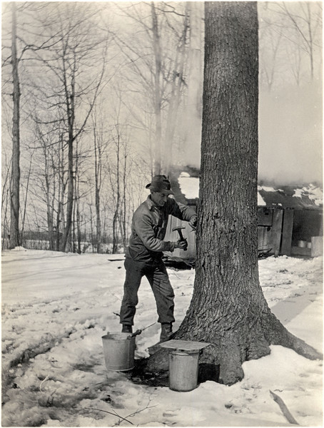 Albert Palmer driving spikes for sap. (Photo ID: 28142)