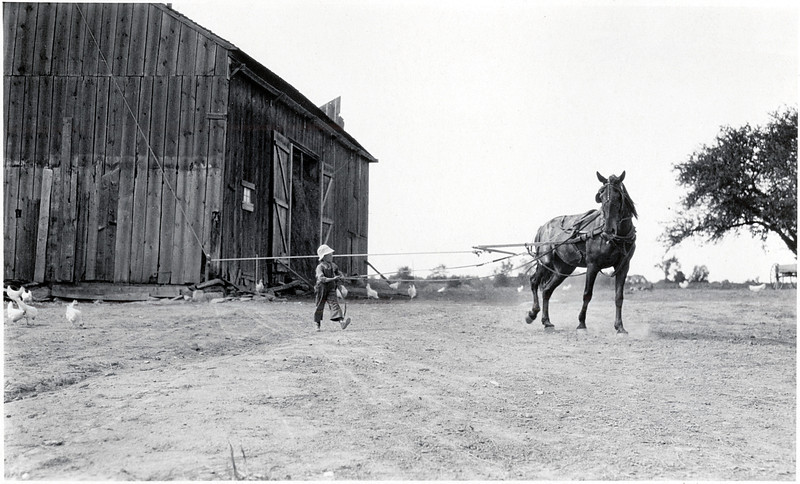 Little boy working a horse to pull hay into the barn. (Photo ID: 29667)