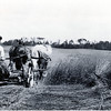 Cutting hay with a sickle bar. (Photo ID: 29665)