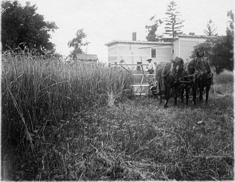 Harvesting wheat July 23, 1914. (Photo ID: 28134)