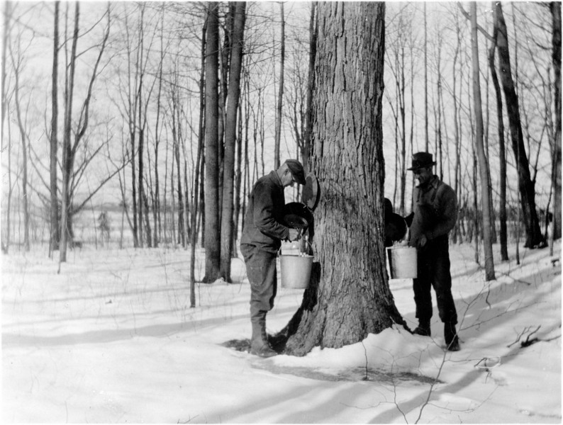 Clarence Palmer and Albert Palmer checking sap. Circa 1930. (Scan ID: 28140)