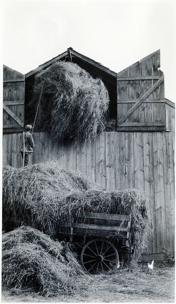 Putting hay in barn. (Photo ID: 29670)