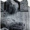 Putting hay in barn. (Photo ID: 29670)