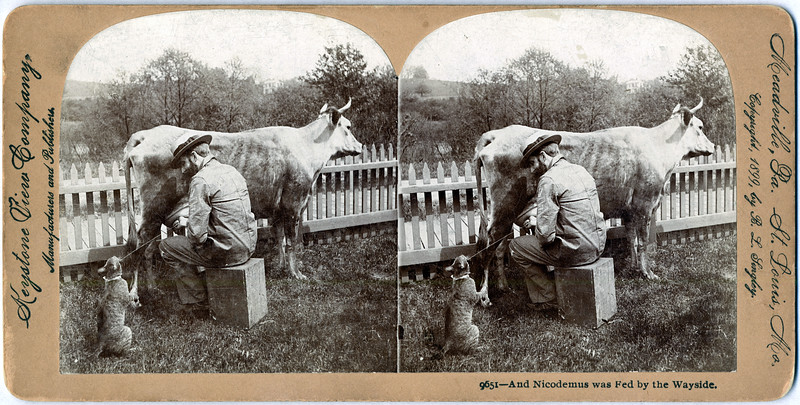 (Cat) Nicodemus was Fed by the Wayside, Copyright 1899, by B.L. Lingley. (Photo ID: 29483)