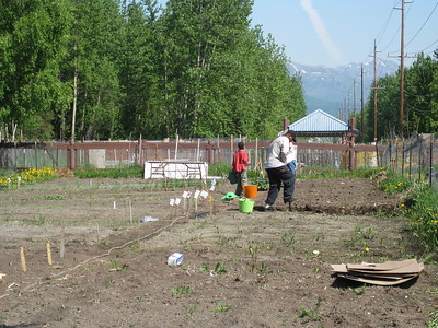 Anchorage Refugee Community Garden.