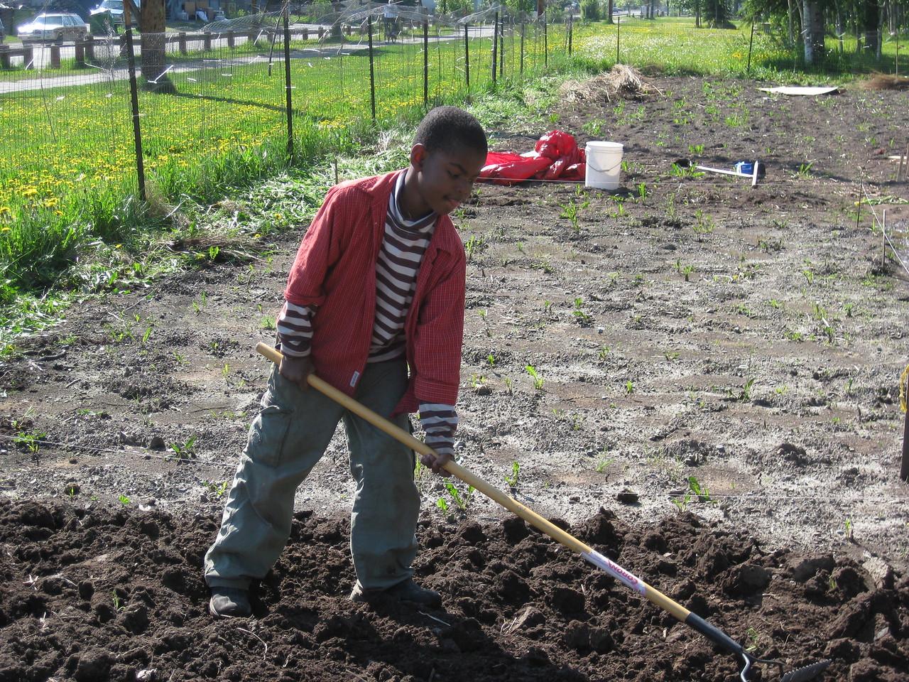 Refugee boy raking in the Anchorage Community Garden.