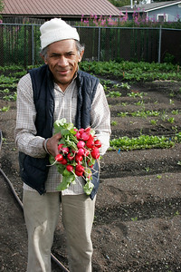 Refugee gardener in Anchorage Alaska at the Community Garden