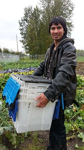 Refugee gardener in Anchorage community garden.
