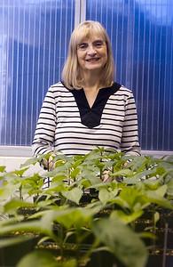 Meriam Karlsson,  Professor of Agriculture, UAF School of Natural Resources and Extension