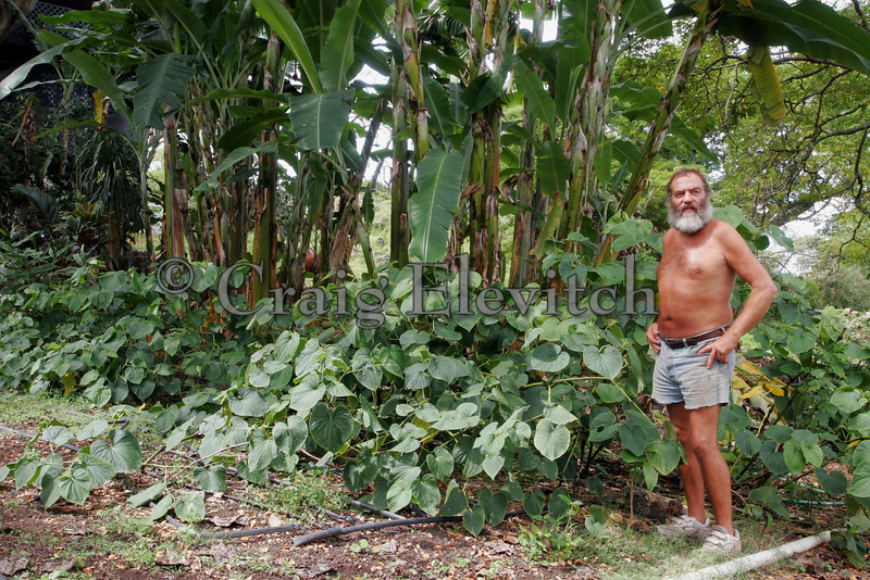 Kava (Piper methysticum) grows best in with some shade, especially in semi-arid conditions. Shown growing under bananas.
