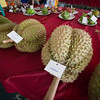 Winner of the biggest fruit competition for durian (14 kg).