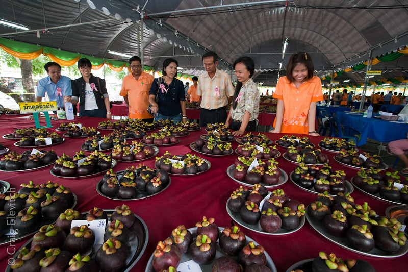 Mangosteen entrants and judges.