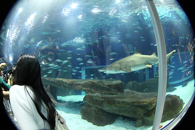Agua Rio Aquarium.......Rio de Janeiro