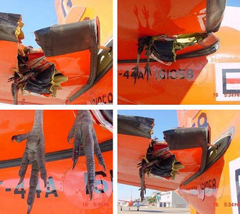 Bird Strike T-44