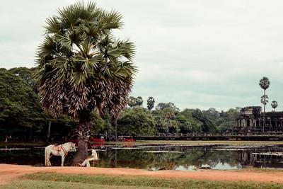 A l'ombre d'un palmier #01