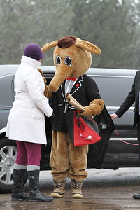 Arty the Aardvark arrives in a limo, celebrity style, to share his predictions for the year.