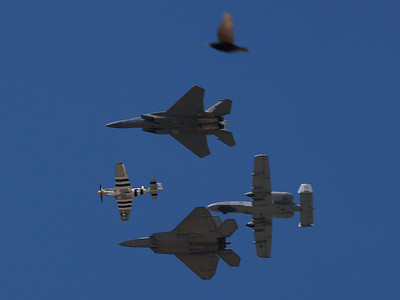 Clockwise from top, a pigeon, F-15 Eagle, A-10 Warthog, F-22 Raptor, P-51 Mustang, Andrews AFB Joint Services Open House, May 19, 2007.