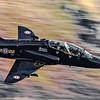 Hawk XX255 1/200sec at F10 with a Canon 300F4L lens.
