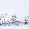 Skeleton Grove