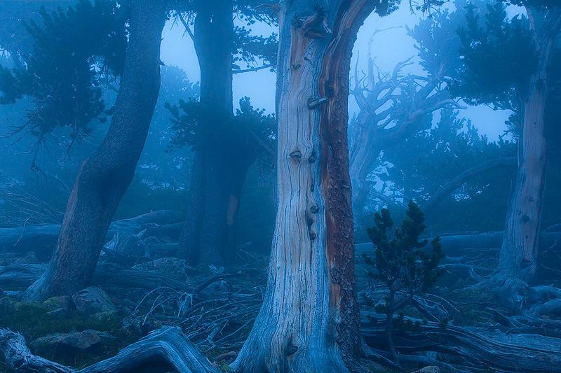 The Pine Gods