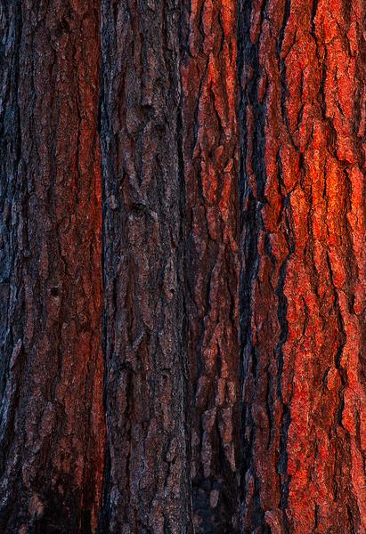Burning Bark
