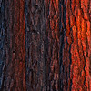 Burning Bark