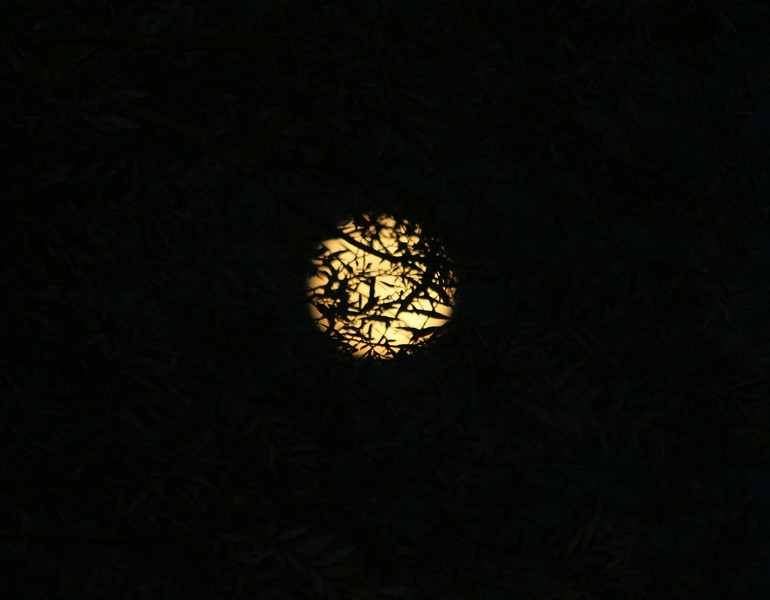 Lune en décalcomanie